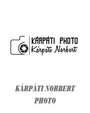 partnereink_norcsiphoto